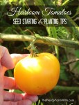 Seed Starting & Planting Tips for Heirloom Tomatoes
