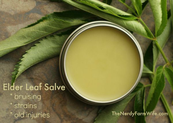 How to Make Salve From Elder Leaves for Bruising, Strains and Old Injuries