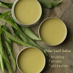 How to Make a Salve from Elder Leaves - good for treating bruising, strains and old injuries