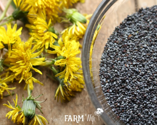 Dandelions & Poppy Seeds for Dandelion Scrub Bar Soap Recipe