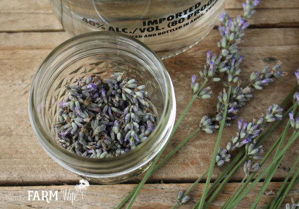 How to Make a Lavender Tincture
