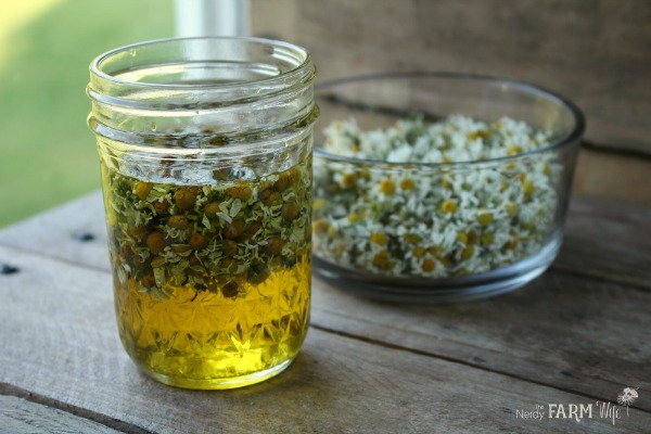 chamomile infusing in oil