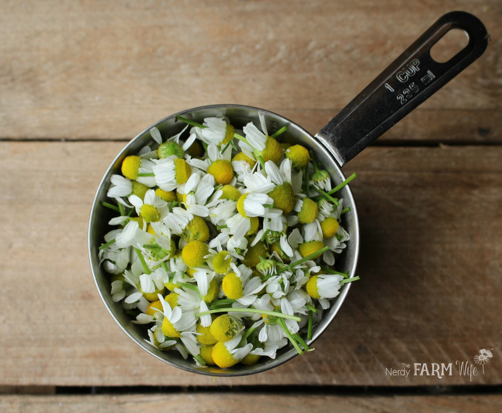 cup of chamomile flowers