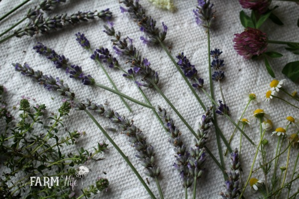 drying lavender and other herbs