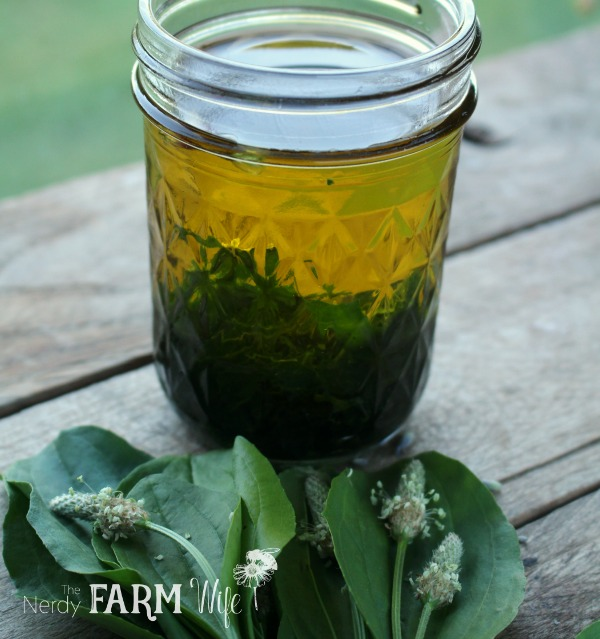 jar of plantain infused oil