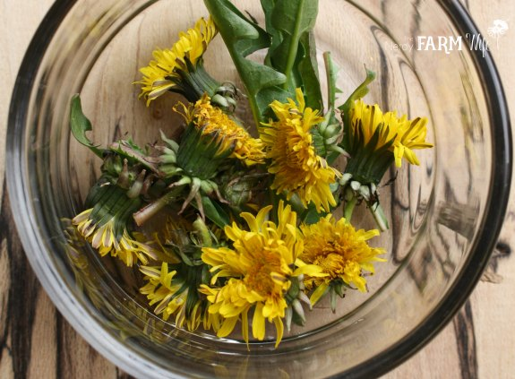 Dandelion Flowers in a Bowl