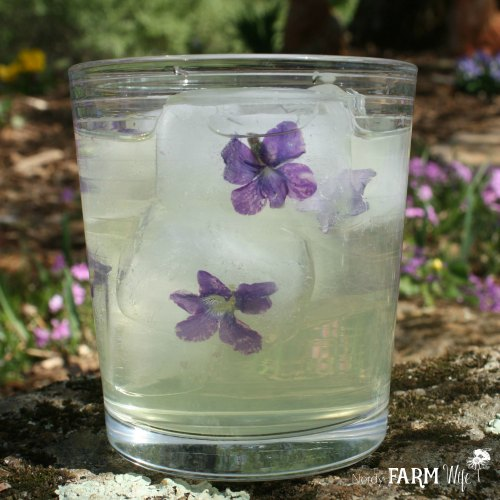 Violet Flowers in Ice Cubes