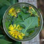 Dandelion Vinegar