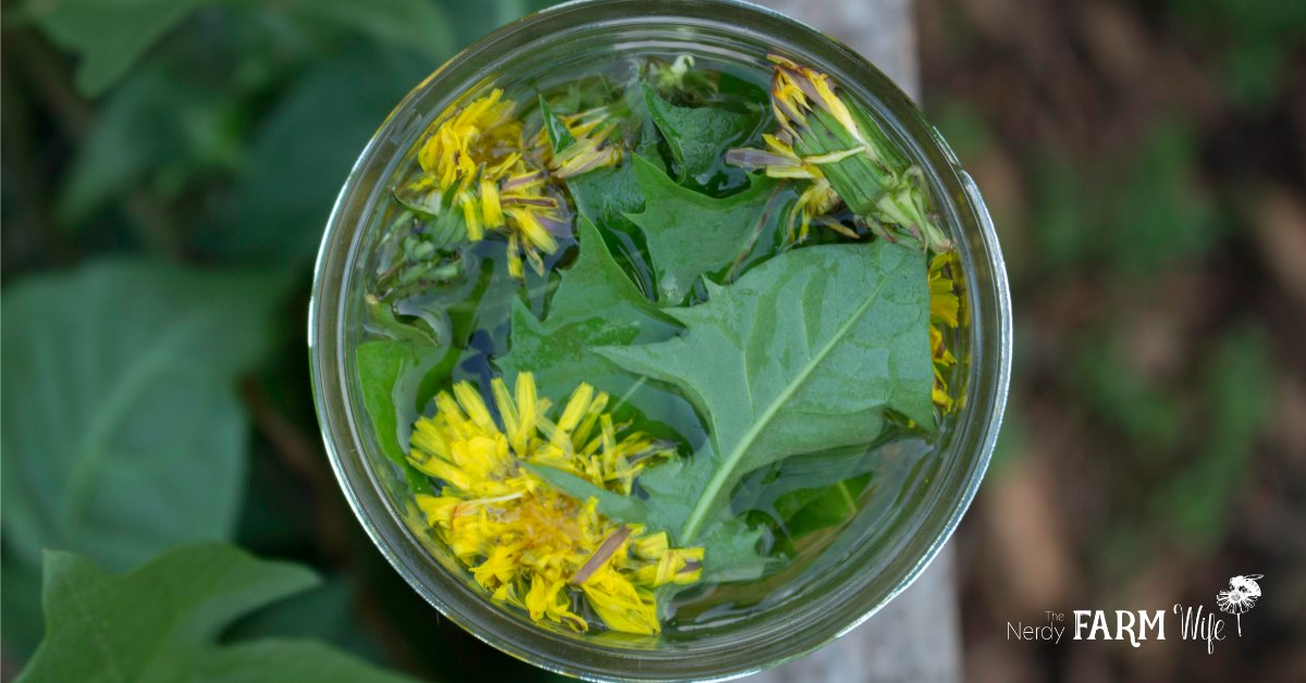 12 things to make with dandelion flowers