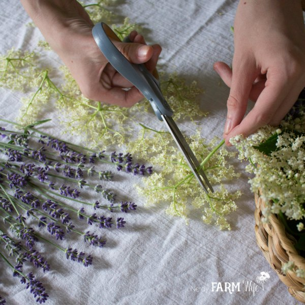 Drying Elder Flowers & Lavender
