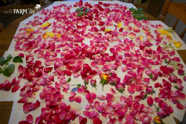 Drying Rose Petals