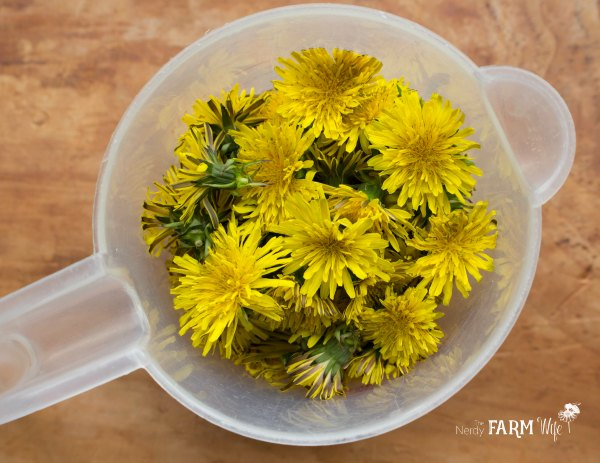 A cup of dandelion flowers