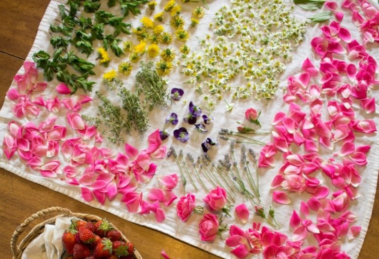 How to Harvest and Dry Flowers & Herbs From Your Garden