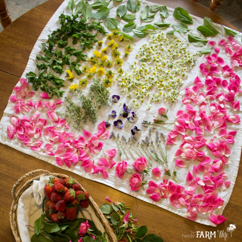 Collection of flowers to dry