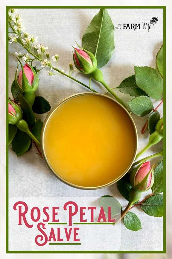 gold tin of rose petal salve surrounded by fresh rose buds