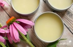 How to Make Purple Coneflower (Echinacea) Salve