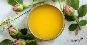 gold tin filled with handmade natural rose petal salve surrounded by fresh rose buds