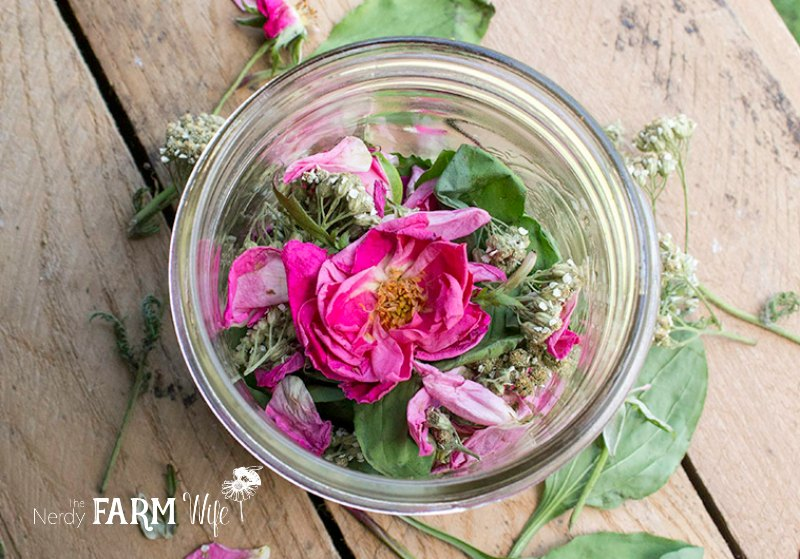 Rose Yarrow and Plantain in a Jar on a wooden background