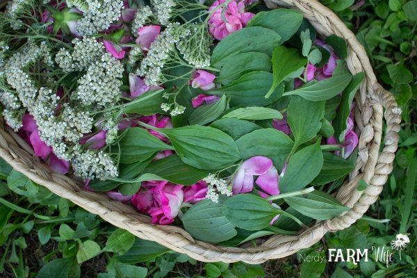 Rose Plantain and Yarrow in Basket on fresh plantain leaves