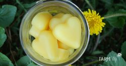 How to Make Dandelion Lotion Bars