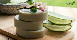 bars of aloe vera facial soap with slices of fresh aloe