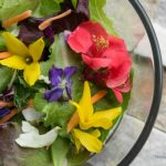 spring salad made of lettuce, carrots, and edible flowers such as forsythia, violets and flowering quince