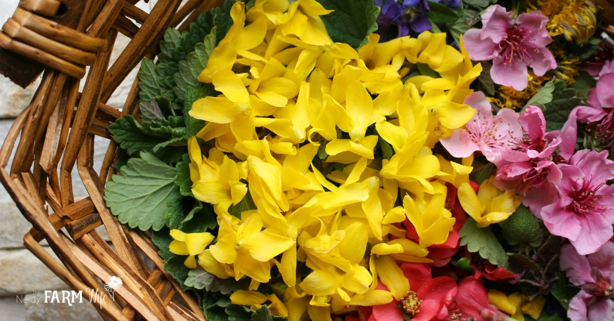 fresh forsythia and other spring flowers in a basket
