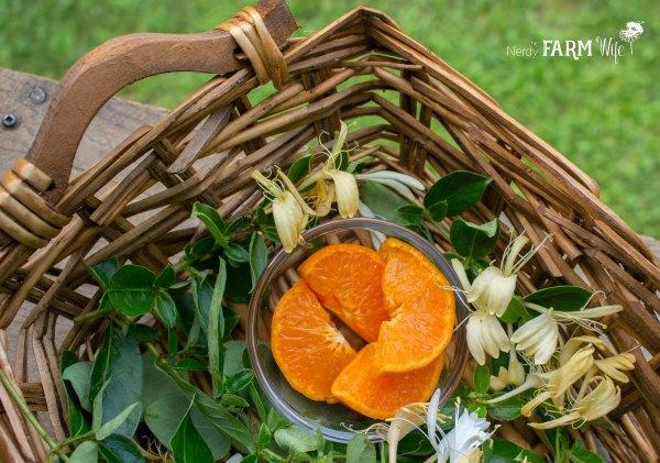 oranges and honeysuckle in a basket