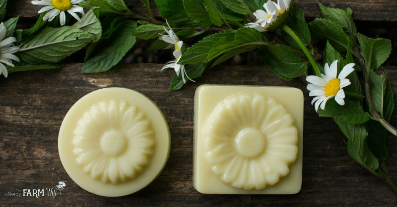 fresh daisies with two daisy infused lotion bars