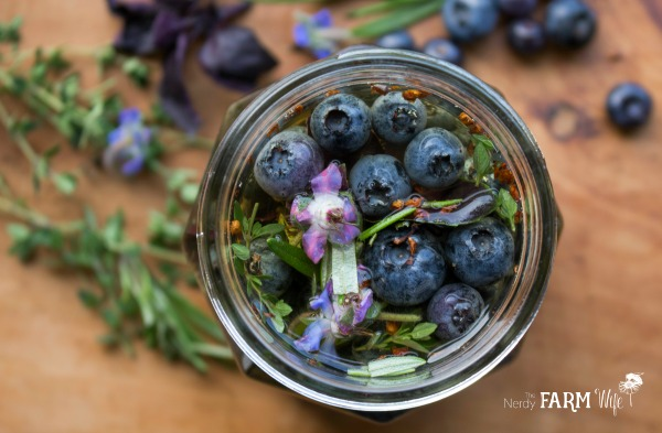 Jar of Blueberries and Herbs for Blueberry Herbal Vinegar