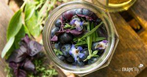 Jar of blueberries, borage flowers, rosemary, thyme, purple basil and vinegar
