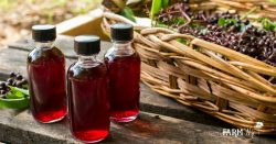Bottles of Elderberry Tincture with Basket of Fresh Elderberries