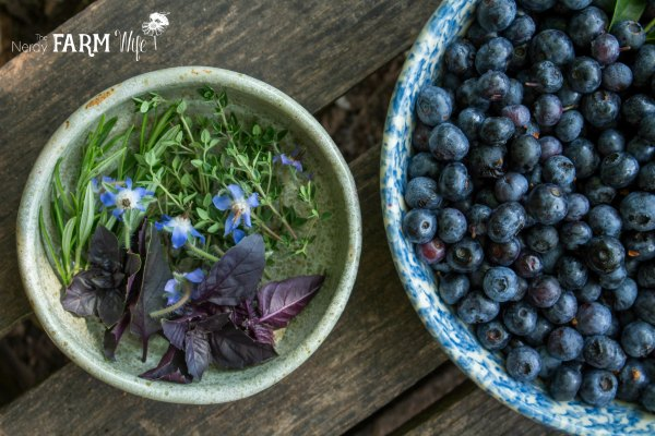 Herbs for Blueberry Infused Vinegar