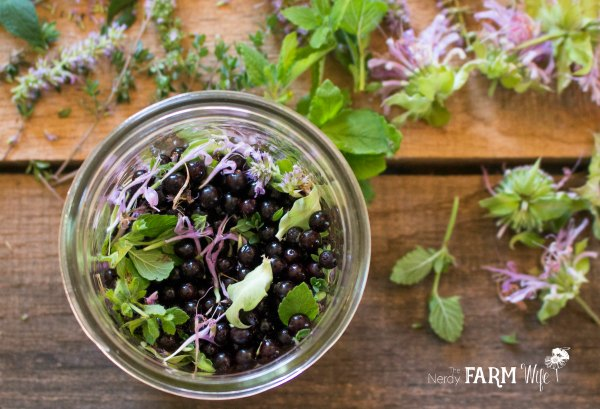 ingredients to make herbal elderberry tincture for colds and flu