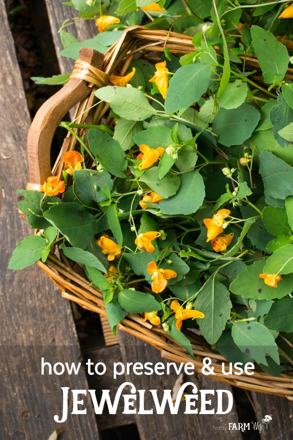 basket of fresh jewelweed