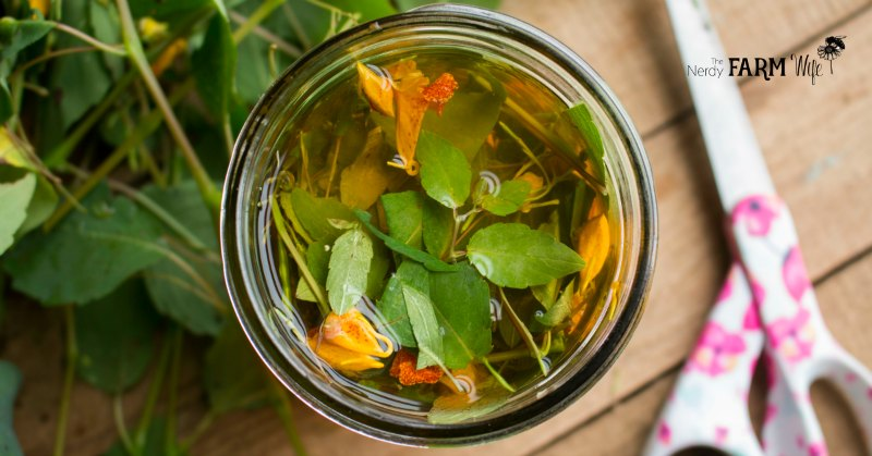 Jar of fresh jewelweed infusing in apple cider vinegar.