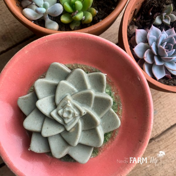 succulent shaped natural soap free clay cleansing bar on a pink handmade ceramic dish with potted succulent plants nearby