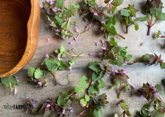 purple dead nettle plants drying on a piece of wax paper