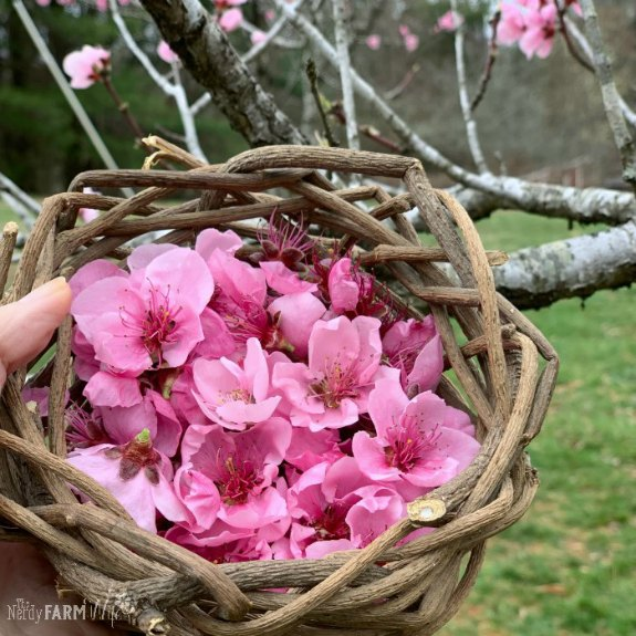 basket of fresh peach blossoms