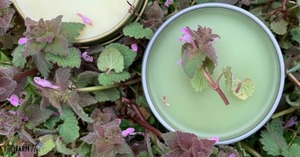 two tins of salve surrounded by fresh purple dead nettle