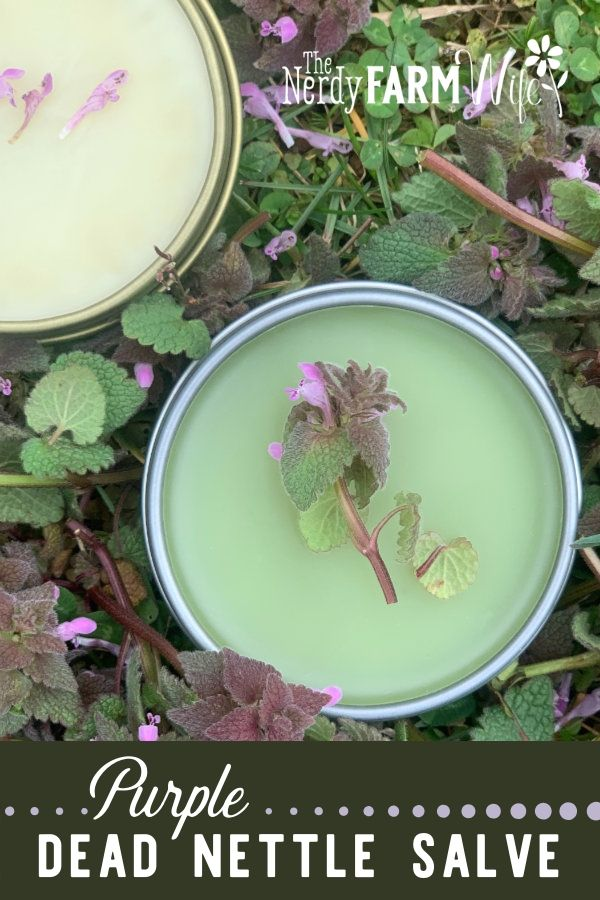 silver tin of green salve surrounded by fresh purple dead nettle plants