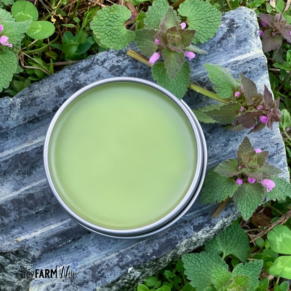 tin of purple dead nettle salve on a gray soapstone soap dish surrounded by fresh purple dead nettle plants