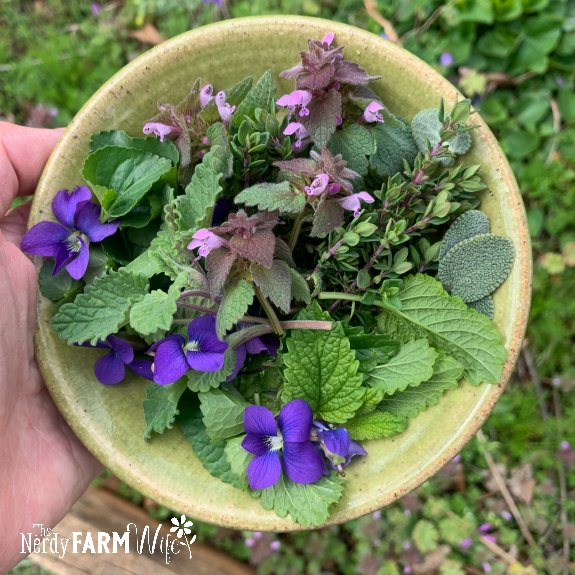 small green saucer with fresh flowers and herbs - violet flower, violet leaves, catnip, lemon balm, purple dead nettle, thyme, sage