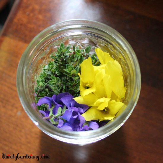 a jar of forsythia, violets, and thyme