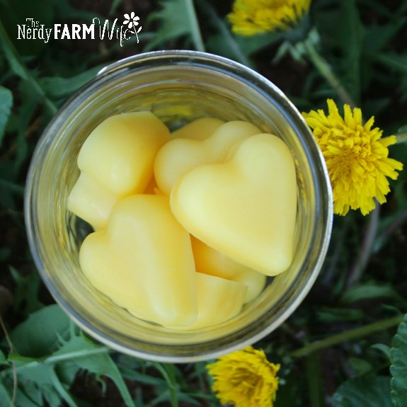 heart shaped dandelion lotion bars in a glass jar surrounded by dandelion flowers and fresh green leaves