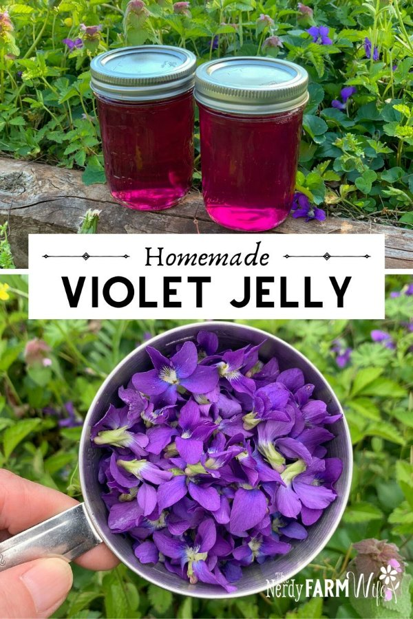 two jars of violet flower jelly above a photo of a stainless steel measuring cup filled with fresh violet flowers