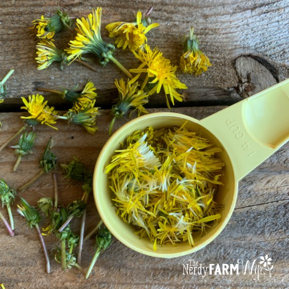 yellow measuring cup on a wooden background partially filled with dandelion petals