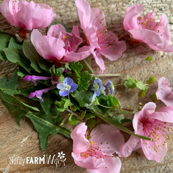 handful of fresh peach flower blossoms on a wooden background with green leaves and tiny blue and purple weeds