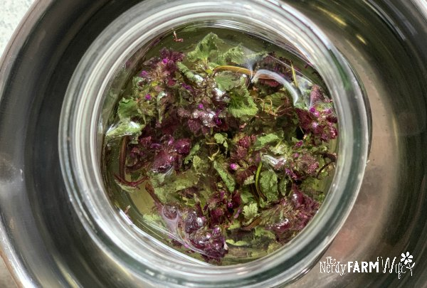 glass jar filled with dried purple dead nettle and oil placed in a stainless steel saucepan with water