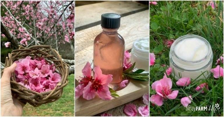 Peach Flower Glycerite & Face Cream (experiments!)